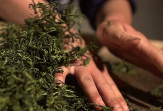 Trà xanh là nguyên liệu tự nhiên có khả năng khử mùi tuyệt vời